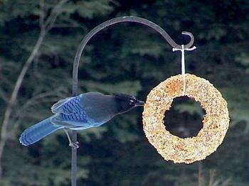 KnittingIrisbirdseedwreath