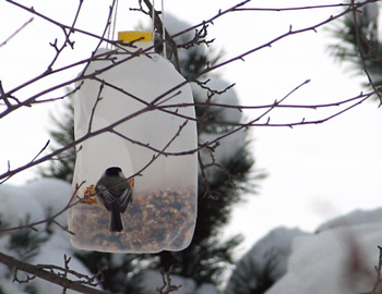 DuckyHousebirdfeeders1