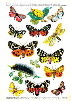 ButterflyProjectHolocaust