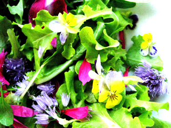 flowers from the garden in salad