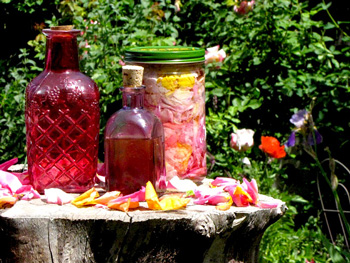 use rose petals to make rosewater