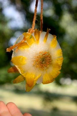 5OrangePotatoesmeltingflowers
