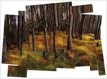ArtProjectsForKidshockneylandscape
