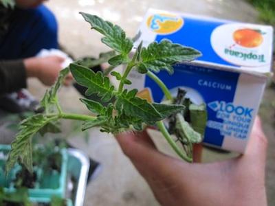 6 topsy turvy planter
