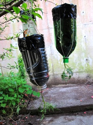 Make A Topsy Turvey Planter From A Plastic Soda Bottle!