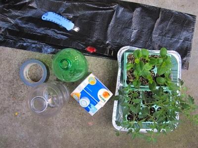 1 topsy turvy planter