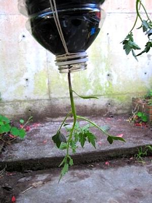 7 topsy turvy planter
