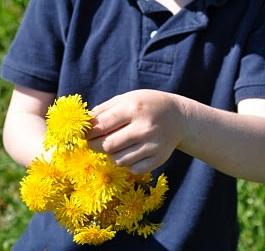 dandelion petal sorbet
