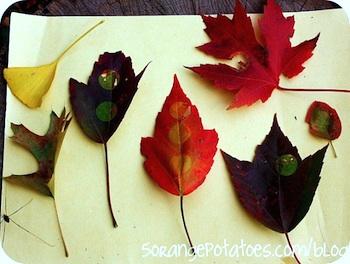 5 Orange Potatoes leaf dots