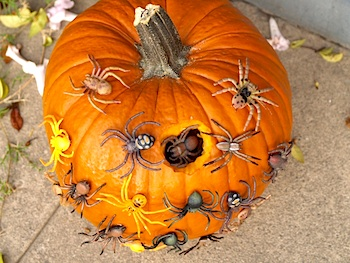 The Magic Onions spider nest pumpkin