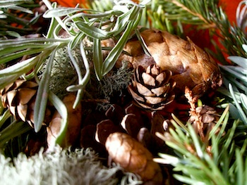 Acorn Pies winter potpourri
