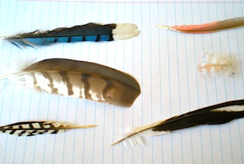 Sippy Cup Central bird feather study