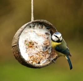 Mini-eco coconut bird feeder