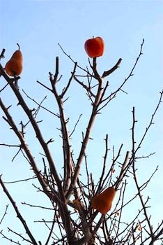 Full Circle bird tree treats