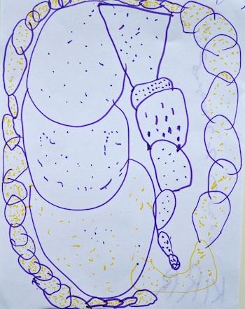 Kira Curly Birds dream picture