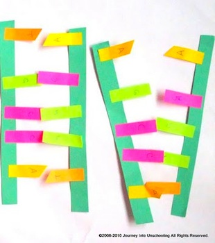 Journey Into Unschooling post-it dna model
