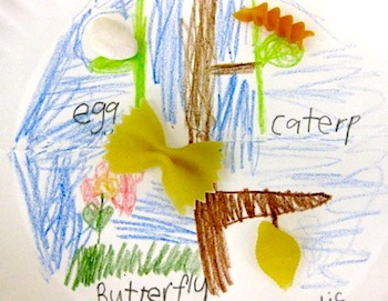 life cycle of butterfly with pasta