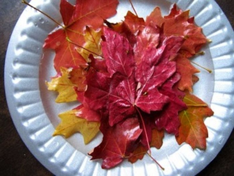 Ordinary Life Magic preserving fall leaves with glycerin