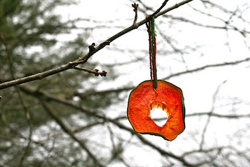 Red Bird Crafts dried fruit ornaments