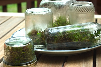 Clean terrariums