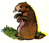 Ground Hog Day Poems 7