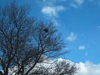 Nest spotting activity