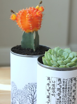 Eliza K Prints tin can planters succulent plants
