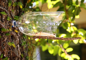 plastic bottle craft bird feeder