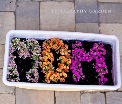 flowers planted to spell MOM