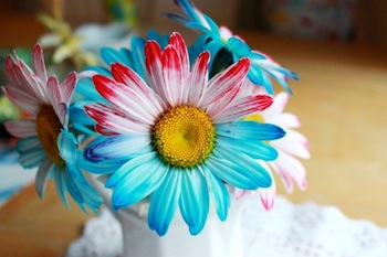 patriotic flowers dyed with food coloring