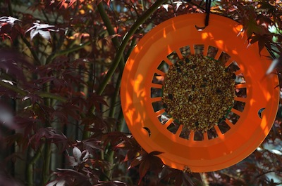 plate holder sunflower bird feeder