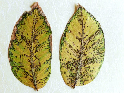 Grow Creative drawing on leaves art project