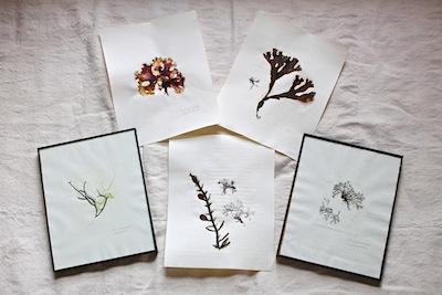 Designskool pressed seaweed DIY for Gardenista