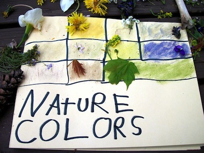 discovering the colors of nature with wildflowers and leaves