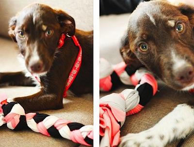 Lana Red Studio upcycled t-shirt craft dog toy tutorial