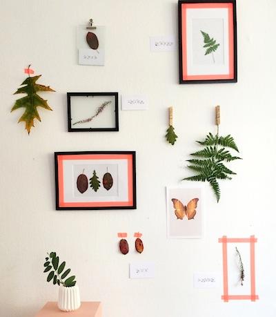 indoor herbarium