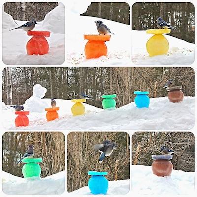colored ice birdfeeders tutorial