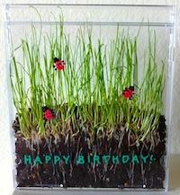 grass in a CD case