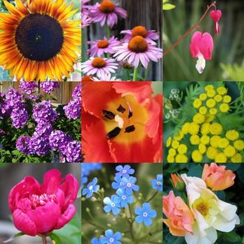 Flowermosaic