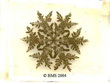 snowflake image by Wilson A. Bentley
