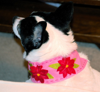 Sophie_models_her_new_collar