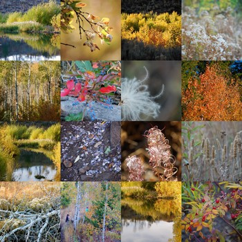 Bella Dia fall photo mosaic