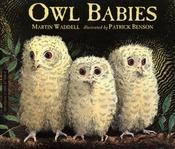 Owl_babies001