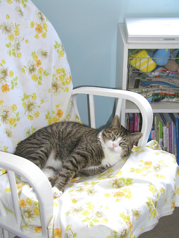 Tom Kitty in chair
