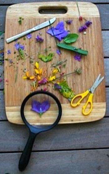 Playfullearningflower