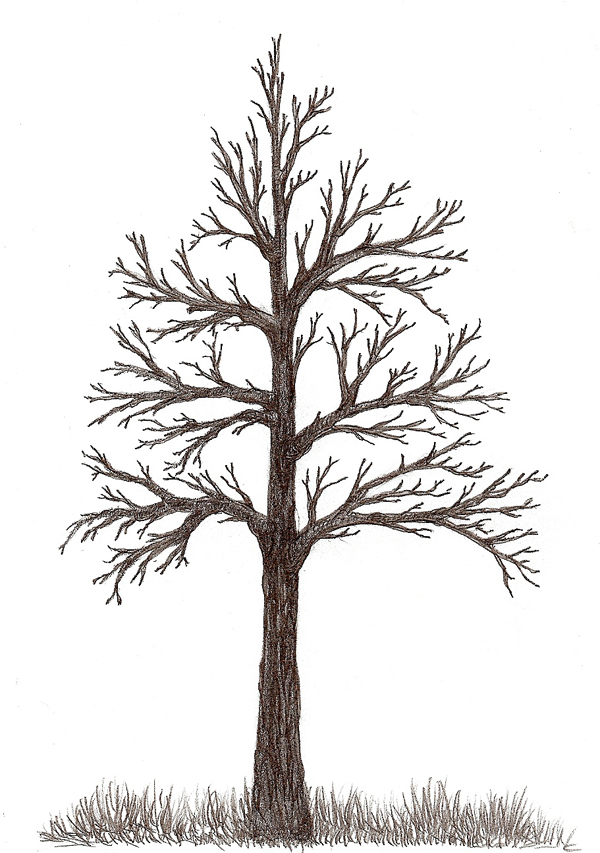 Easy Abstract Tree Drawings Wanted to be Able to Draw